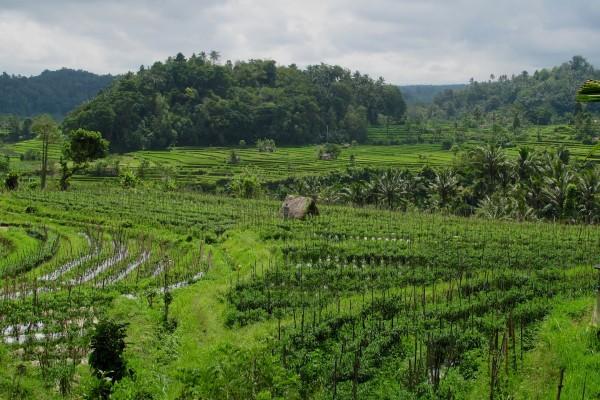 Bali  Sidemen Road