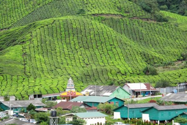 Malaisie Cameron Highlands village